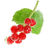 Currant in bubbles — Stock Photo