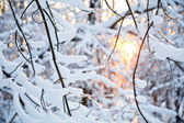 冬の日没 — ストック写真