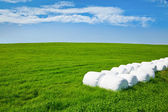 Silage bales on a field — Stock Photo