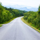 Empty forest road — Stockfoto