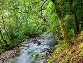 Liten skog flod i morgonljuset — Stockfoto