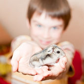 Kid with hamster — Stock Photo