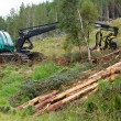Stock Photo: Forest harvester