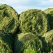 Stock Photo: Round silage bales