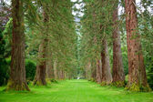 Redwood Avenue — Stockfoto