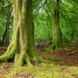 Forest in Scotland — Stock Photo #17631457