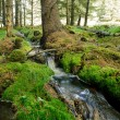 Forest stream — Stock Photo #17631469