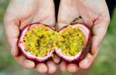 Hands holding Passionfruit — Stock Photo
