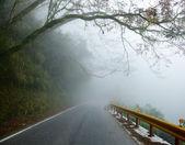 Misty road — Stock Photo