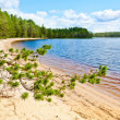 Pine branch against forest lake — Stock Photo #25231661
