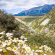 New Zealand scenic landscape - Stock Photo