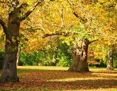 Kew Gardens park — Stock Photo