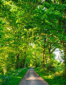 Green oak road — Stock Photo
