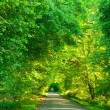 Green tunnel road — Stock Photo