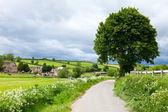 English summer landscape — Stock Photo