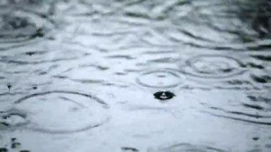 Rainy weather — Video Stock