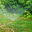 Sprinkler in action — Stock Photo