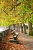 Benches on Thames Embankment — Stockfoto
