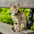 Stock Photo: Young cat