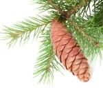 Weihnachten Fichte Zweig mit Zapfen auf weißem Hintergrund — Stockfoto