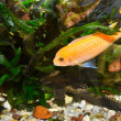 Colorful aquarium with fish — Stock Photo