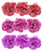 Bouquet de fleurs colorées — Photo
