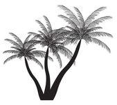 Palm silhouette. Vector illustration. EPS 10. — Cтоковый вектор