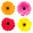 Set of gerbera flowers isolated on white background — Stock Photo