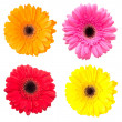 Set of gerbera flowers isolated on white background — Stok fotoğraf