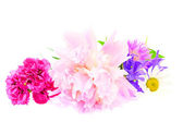 A bouquet of peony, carnation and clover isolated on white backg — Stock Photo