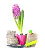 Planting Flowers, Pot, Shovel, Bucket, Seed Isolated on White — Stock Photo