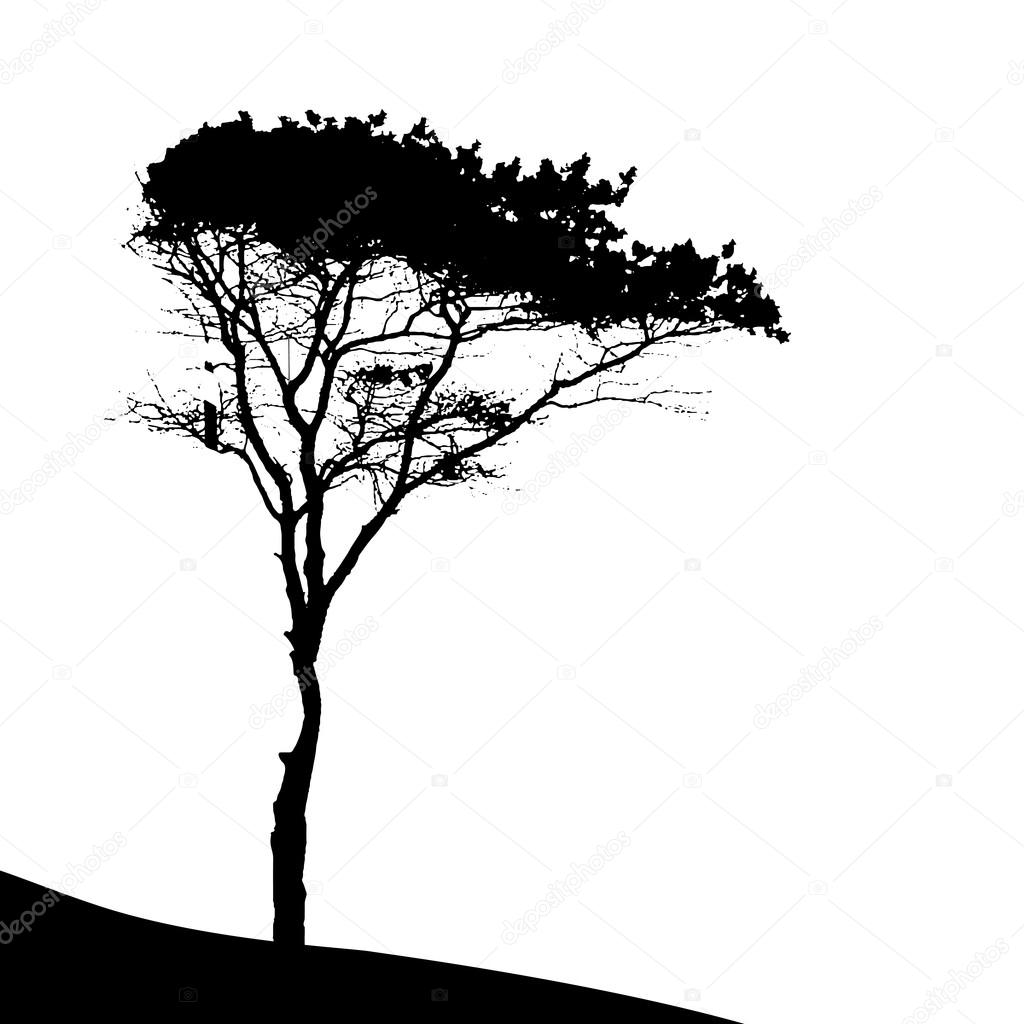 silhouette d 39 arbre pin image vectorielle oleggankod. Black Bedroom Furniture Sets. Home Design Ideas