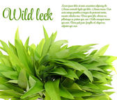 Wild Leek Isolated on White Background — Stock Photo