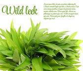 Wild Leek Isolated on White Background — Foto Stock