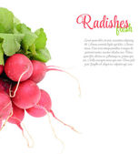 Fresh Radishes Isolated on White Background — Stock Photo