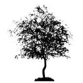 Silueta de árbol — Vector de stock