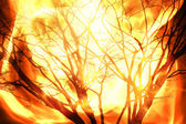 Fire burning tree — Stock Photo