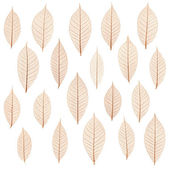 Transparent leaf — Stock Photo