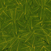 Yellow green transparent leaf pattern — Stock Photo