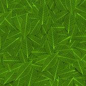 Green transparent leaf pattern — Stock Photo