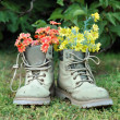 Red and yellow flowers in old shoes — Stock Photo