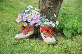 Flowers in old shoes with red shoelaces — Stock Photo
