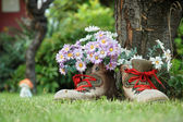 Flowers in old shoes with red shoelaces on lawn — Stock Photo