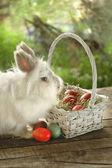 Bunny in de buurt van witte mand met Pasen eieren — Stockfoto
