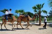 Camel caravan — Zdjęcie stockowe