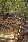 Oak forest picnic site — Stock Photo
