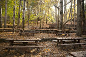Oak forest picnic site — Stock Photo