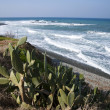Plants on Mediterranecoast — Stock Photo #19748853