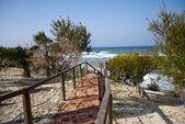 Coastal path — Stock Photo