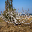 Stock Photo: Dead tree grow again